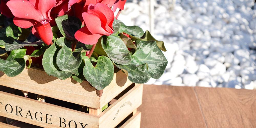 Plantas para jardín de exteriores